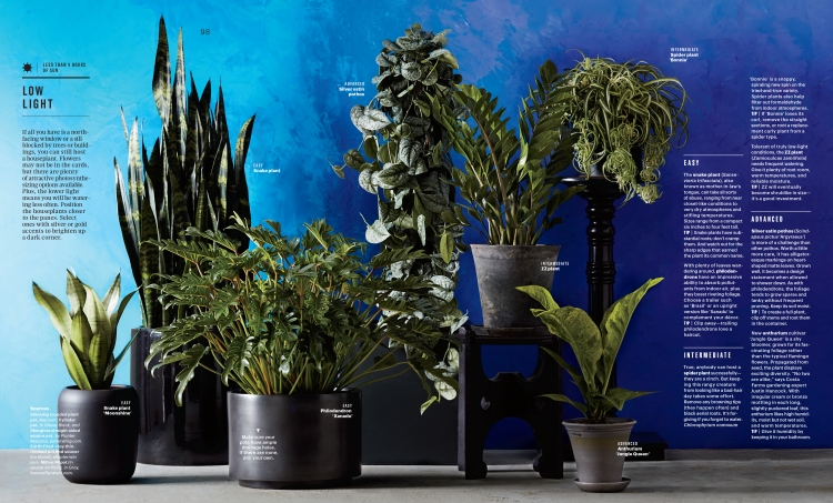 Feb Houseplants Feature-2