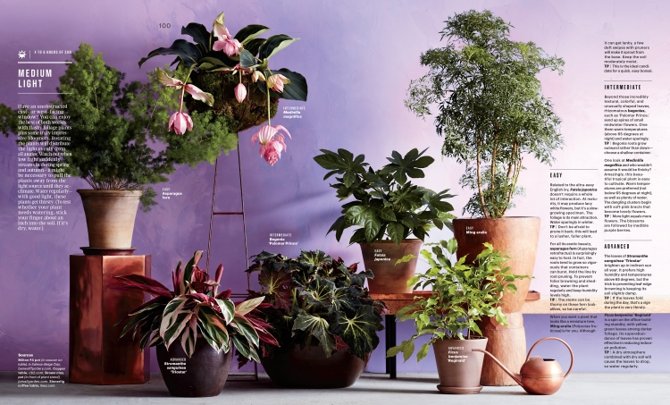 Feb Houseplants Feature-3