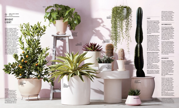 Feb Houseplants Feature-4